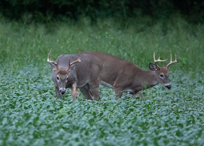 Bucks Begin to Battle