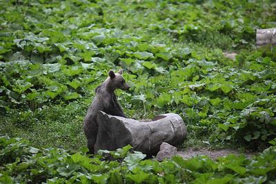 baby bear, Romania