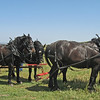 April 25, 2009 - Draft Horses at Rush Ranch outside Fairfield, CA.