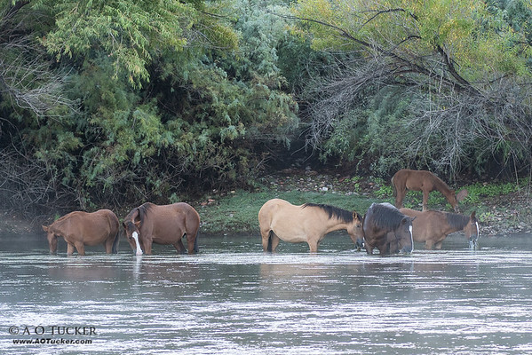 Wild Horse Watering Hole