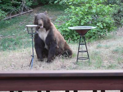 Bear, 22 Jun 2007