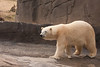 Polar bear - 2