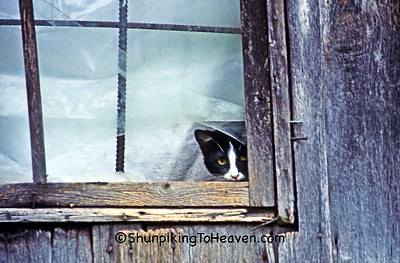 Cat in Window, Casey County, Kentucky