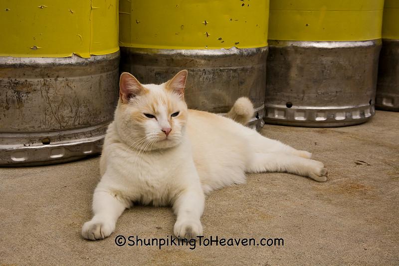 Kegger Kitty, Iowa County, Wisconsin