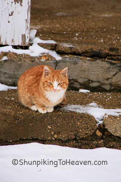 Orange Kitty on a Cold Winter Morning, Rock County, Wisconsin