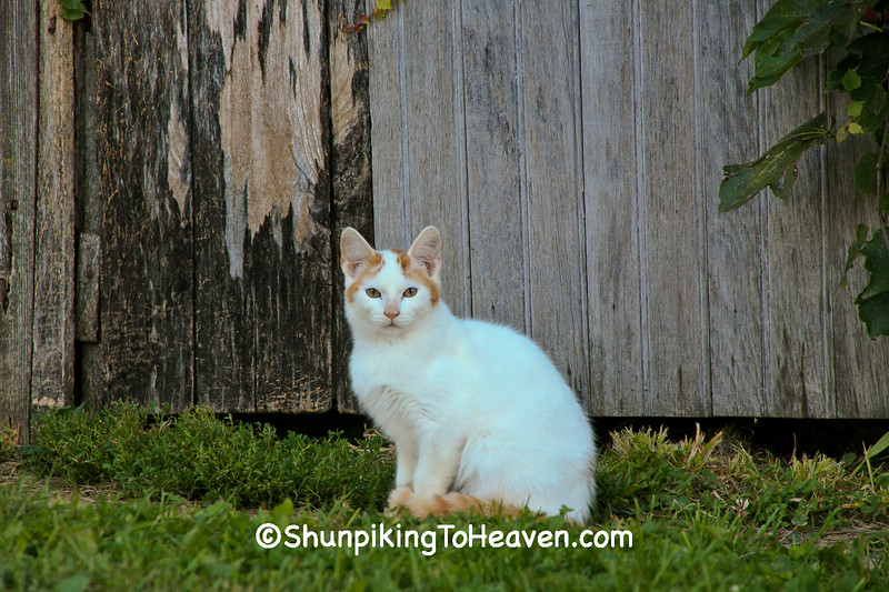 Farm Cat, Jackson County, Iowa