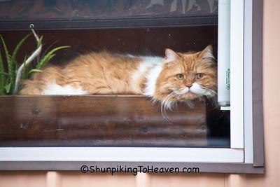 Cat, People-Watching, Ironwood, Michigan