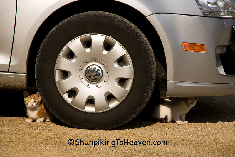 """""""Scaredy Cats"""" - Kittens Under the Car, Rock County, Wisconsin"""