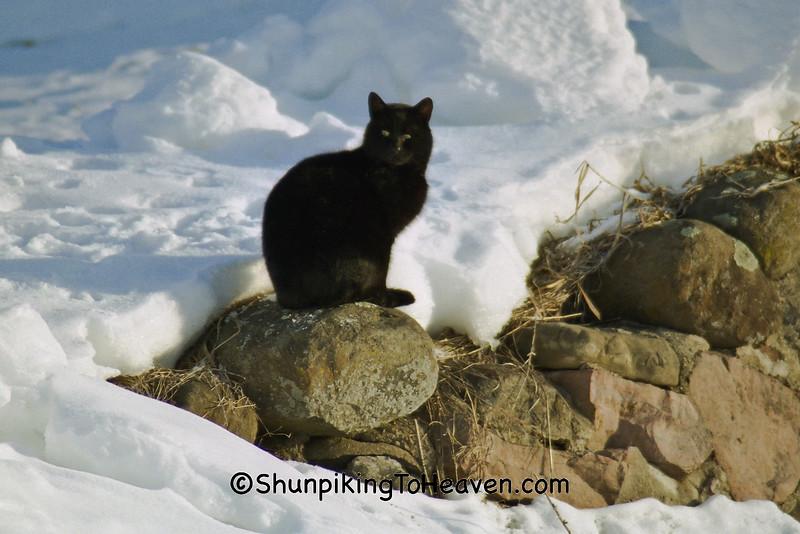 Black Cat in Winter, Green Lake County, Wisconsin