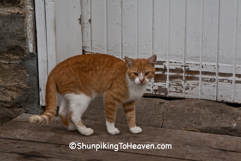 Barn Cat, Grundy County, Iowa