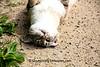 Topsy-Turvy Farm Cat, Sauk County, Wisconsin