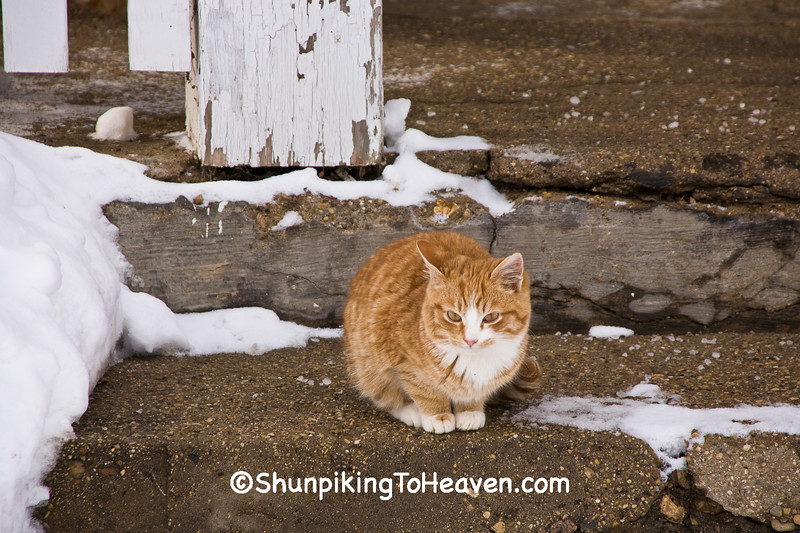 Cat at the Cooksville General Store, Rock County, Wisconsin
