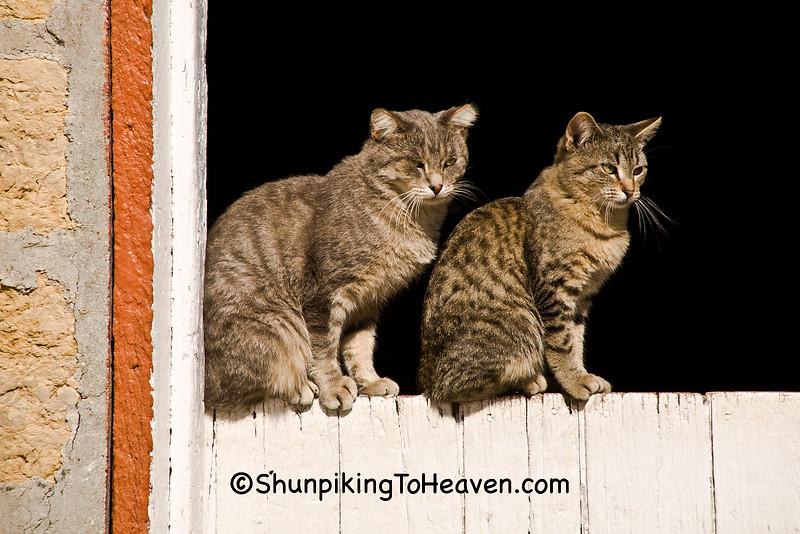 Cats on Dutch Barn Door, Stephenson County, Illinois