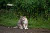 Story Cat, Story, Indiana