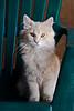Cat at Villebro Farm, Stephenson County, Illinois