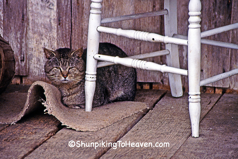 Cat on the Porch of Penn's Store, Gravel Switch, Casey County, Kentucky