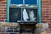 Two Cats in Window, Bonaparte, Iowa