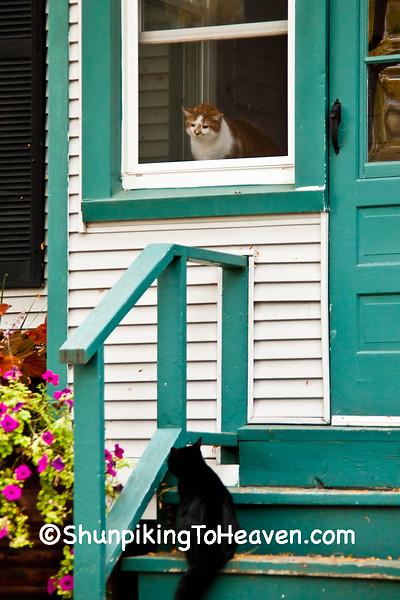Unwelcome Visitor, Sauk County, Wisconsin