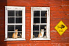 Cats in the Window, Dodge County, Wisconsin