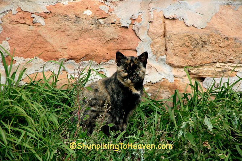 Farm Cat by Barn Foundation, Sauk County, Wisconsin