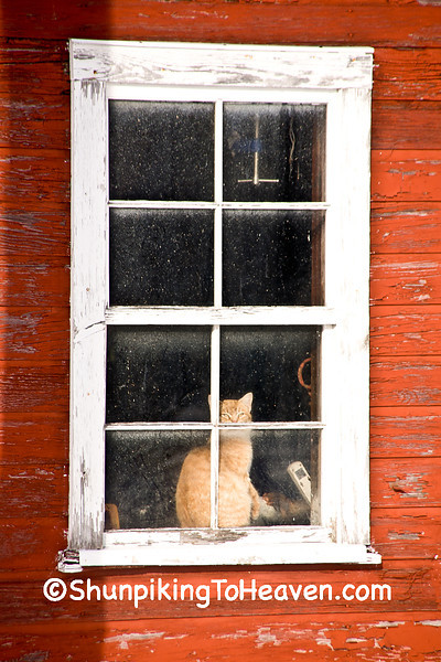 Cat in the Window, Dodge County, Wisconsin