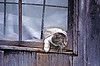 Cat Escaping Through Window, Casey County, Kentucky