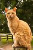 Eb, the Cat, Dane County, Wisconsin