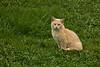 Cat Enjoying Early Spring, Green County, Wisconsin