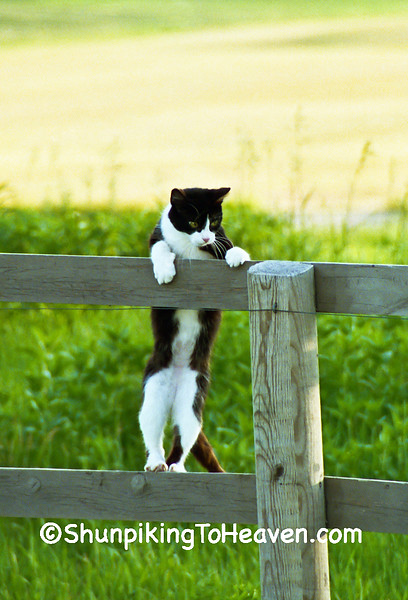 Cat Hanging Out, Dane County, Wisconsin