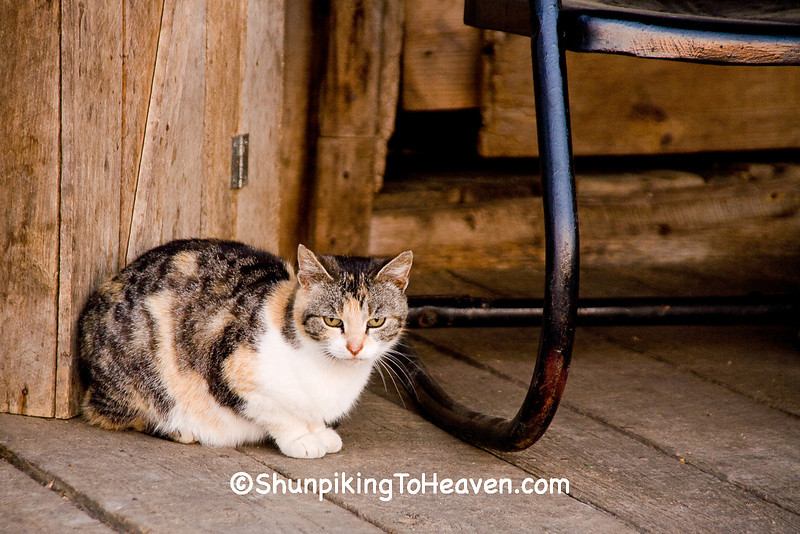 Cat on the Porch of Penn's Store, Casey County, Kentucky