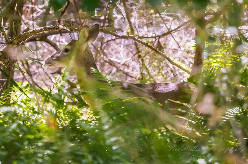 Chestnut park,deer(am workf +)   2018-03-15-3150036