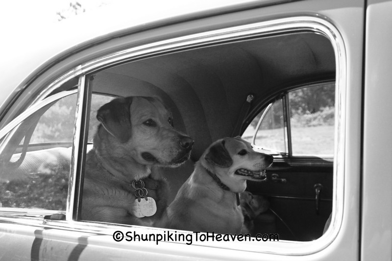 Rambo and Rowdy Waiting for a Ride, Alamance County, North Carolina