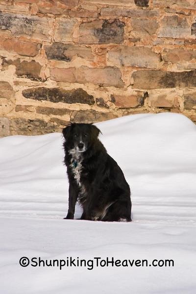 Dog and Old Barn at Christmas, Sauk County, Wisconsin