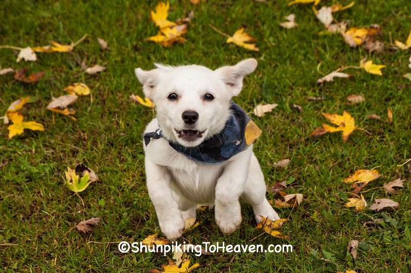 Trixie the Puppy, Columbia County, Wisconsin