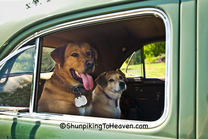 Rambo and Rowdy Waiting for a Ride, Alamance County, North Carolina