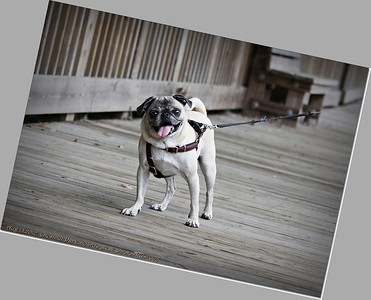 Aug 13,2012  Chestnut Park,boardwalk_IMG_0527_