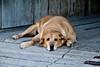"""Dog-Tired"", Madison County, Iowa"