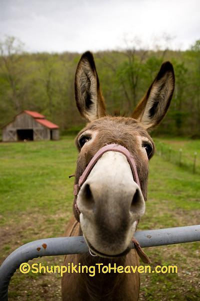 Shrek Donkey Double, Scioto County, Ohio