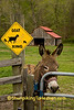 Donkey at the Goat Crossing, Scioto County, Ohio