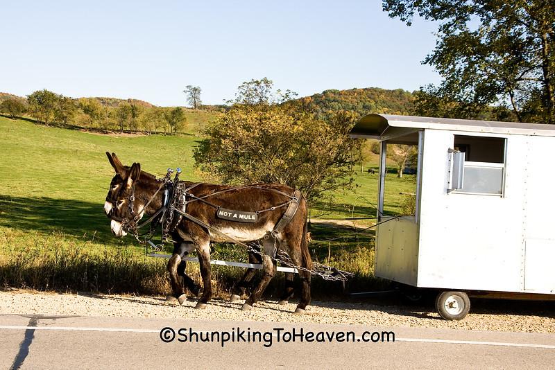 """Not a Mule"" - Donkey Train, Richland County, Wisconsin"
