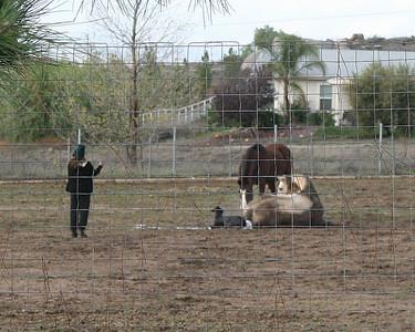Foal, 23 Dec 2010
