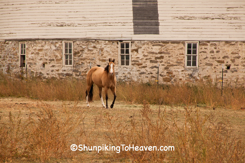 Horse by Round Barn, Buffalo County, Wisconsin