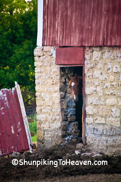 Horse in Barn Door, Dane County, Wisconsin