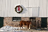 Christmas on the Farm, Dane County, Wisconsin