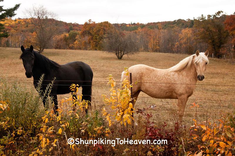 Horses in Autumn, Jackson County, Wisconsin