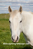Horse in Pasture, Darke County, Ohio