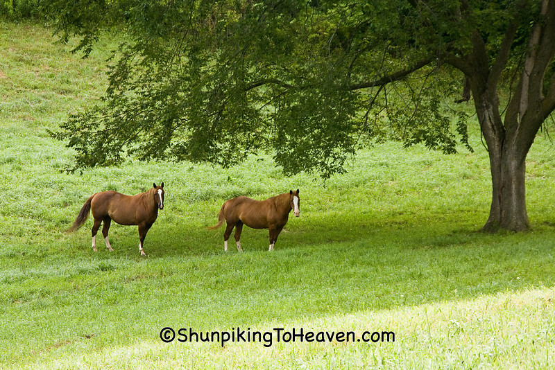 Horses in the Pasture, Richland County, Wisconsin