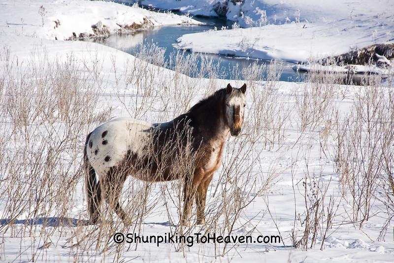 Winter Horse, Iowa County, Wisconsin