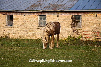 Kevin, the Belgian Horse, Monroe County, Wisconsin