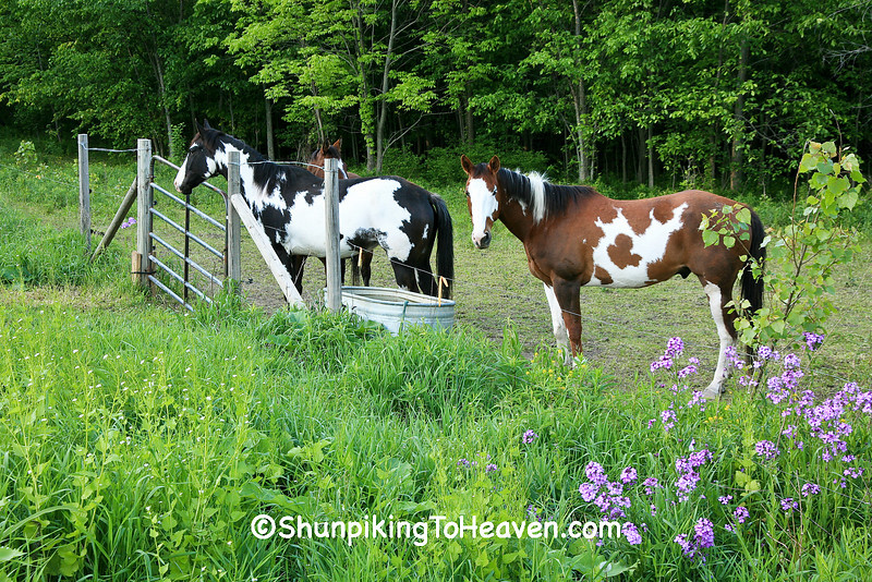 Paint Horses, Barry County, Michigan